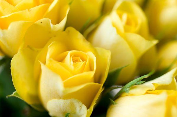 Красный чай с желтыми бутонами роз. Чайная Лавочка